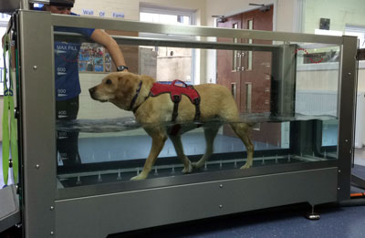 The treadmill at 4 Paws Hydrotherapy Centre Ringwood