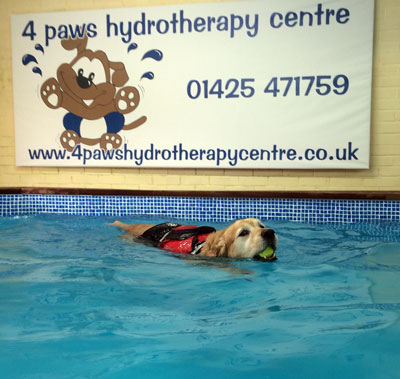 The pool at 4 Paws Hydrotherapy Centre Ringwood